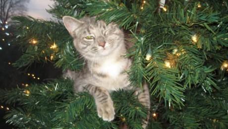 Не разрешайте домашним животным спать возле елки