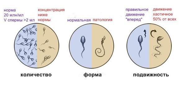 Показатели спермограммы норма и паталоги