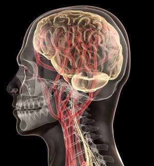 Провести трансплантацию головы будет невероятно сложно.