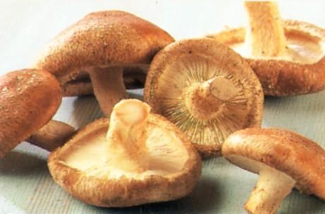 Японские грибы шиитаке помогут в борьбе с раком