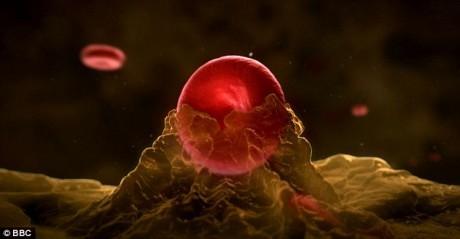 """Увеличение числа молекул меди в крови (на фото) заставляет раковые клетки активней """"дышать"""",  в результате чего увеличивается их темп роста"""