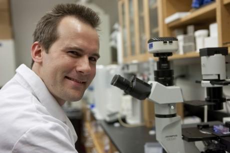 Ученые выяснили, что белок IL23A защищает желудок от бактериальной инфекции