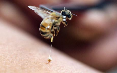 Как действовать при укусе пчелы