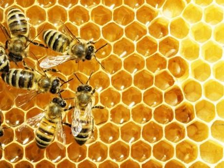 Свежий мед помогает бороться с устойчивыми инфекциями.