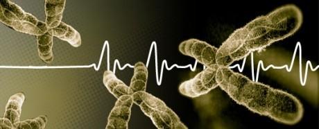 Управление активностью теломеразы позволит лечить многие болезни, связанные  со старением организма.