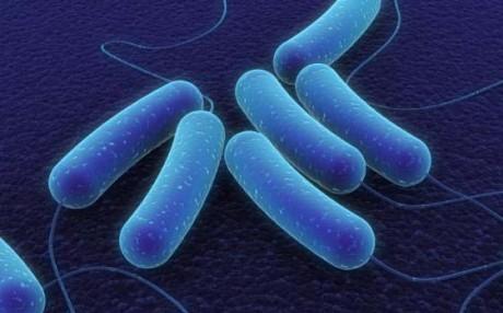Воспаления, которые приводят в метаболическому синдрому, также способствуют возникновению болезни Крона.