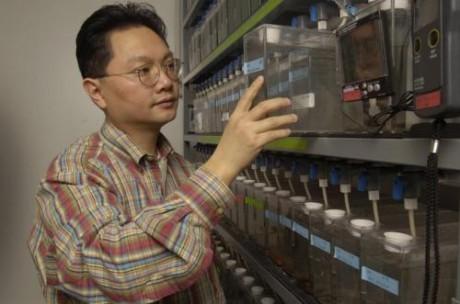 """""""Подавление активности Notch может подтолкнуть клетки-предшественники к восстановлению волосковых клеток"""", - считает Чжэн-И Чен"""