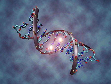 Некоторые гены делают своих носителей более склонными к эффекту плацебо
