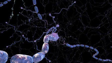 Исследователи обнаружили, что 2 препарата, используемые для лечения распространенных заболеваний кожи, помогают бороться с   рассеянным склерозом