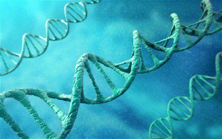 Отключение определенных генов поможет продлить жизнь
