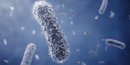 Число трех видов бактерий увеличивается при диабете