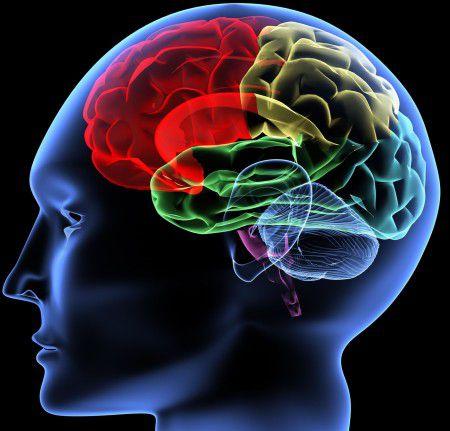 Мозг женщины и мужчины не имеет отличий