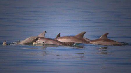 В крови дельфинов найдена ртуть