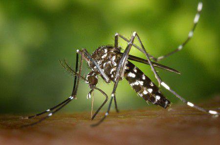 Ученые сделали малярийного комара безопасным