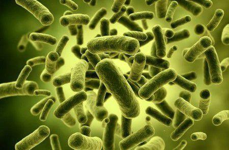 Микробы помогут установить точное время смерти