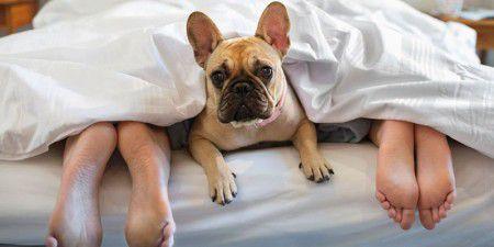 Домашние животные укрепляют сон