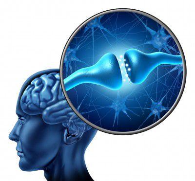 Рецепторы мозга могут регулировать вес человека