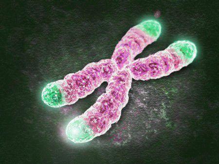 Частые роды сохранят длину теломер