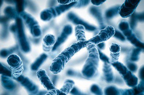 Х-хромосома не содержит важных генов