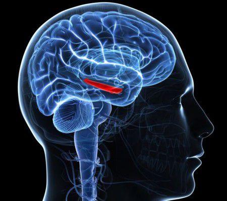 Агрессия приводит к изменению в гиппокампе