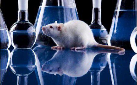 """Ученые, проведя """"чистку"""" с помощью препарата, добились продления жизни грызунов на 35%"""