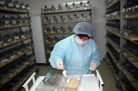 Разработан регламент пересадки органов человека лабораторным животным