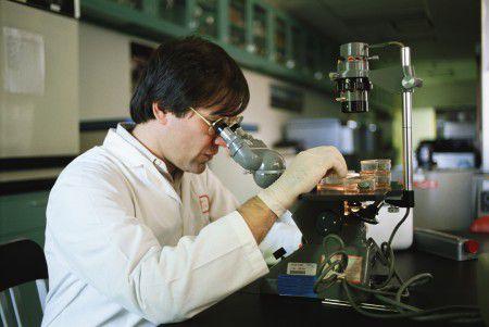 Ученые планируют создавать детей в пробирках с помощью стволовых клеток