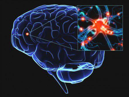 Новые нейроны стимулируют мозг к активной работе