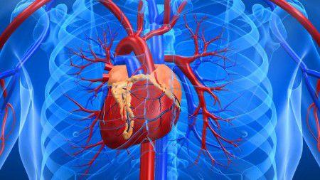 Новый прибор поможет поддерживать работу сердца дистанционно