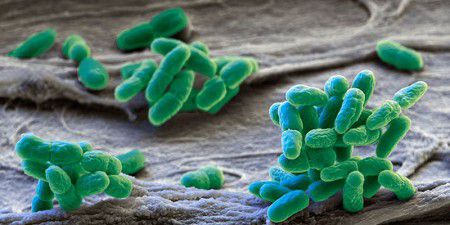 Термоустойчивые бактерии погибли в течение 25 секунд