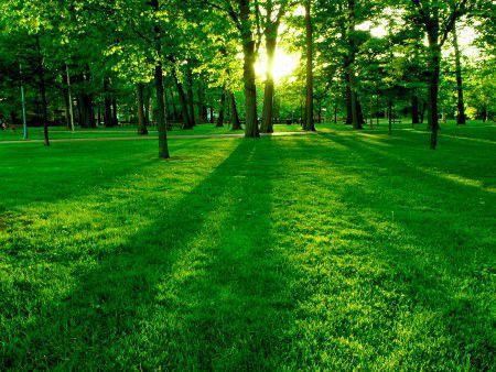 Близость природы помогает увеличить продолжительность жизни