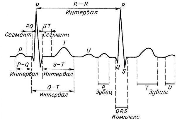 Основные характеристики кардиограммы