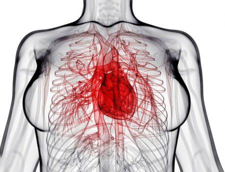 Нарушения эндокринной системы являются причинами возникновения дисгормональной кардиомиопатии